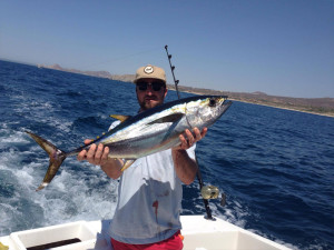 Yellowfin Tuna fished in Cabo on 6/7/16
