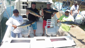 Yellowfin Tuna fished in Cabo on 6/18/16
