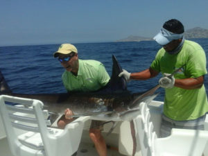 Striped Marlin fished in Cabo San Lucas on 7/11/16