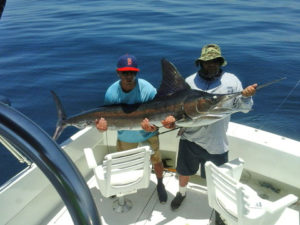 Striped Marlin fished in Cabo San Lucas on 7/13/16
