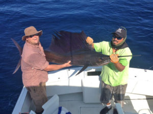 Pacific Sailfish fished in Cabo San Lucas on 8/2/16