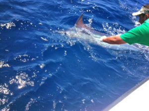 200 lb. BLUE MARLIN fished in Cabo on 10/07/16