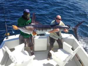 160 lb. Striped Marlin fished in Cabo on 9/13/16