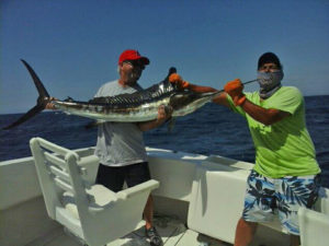 110 lb. Striped Marlin fished in Cabo on 9/22/16