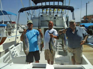 Yellowfin Tuna fished in Cabo on 9/15/16