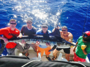STRIPED MARLIN fished in Cabo on 11/05/16