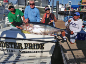 YELLOWFIN TUNA fished in Cabo on 11/09/16