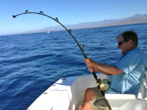 Striped Marlin fished in Cabo San Lucas on 12/08/16