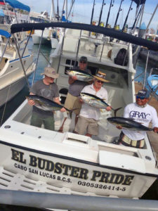 Yellowfin Tuna fished in Cabo on 11/23/16