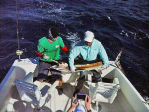 Striped Marlin fished in Cabo San Lucas on 1/15/17