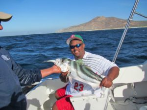 Roosterfish fished in Cabo San Lucas on 4/26/17