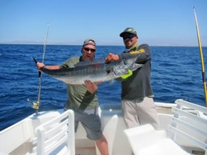 Wahoo fished in Cabo San Lucas on 6/2/17
