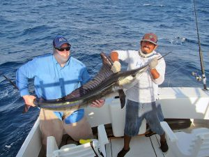 Striped Marlin fished in Cabo San Lucas on 8/25/18