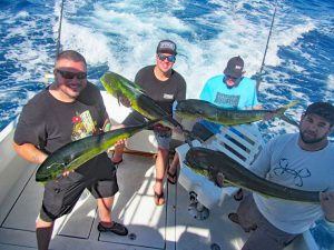 Dorado fished in Cabo San Lucas on 11/08/18