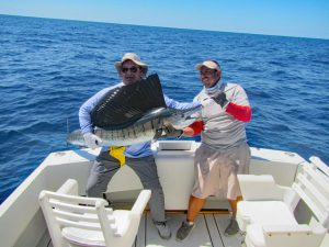 Sailfish fished in Cabo San Lucas on 10/17/18