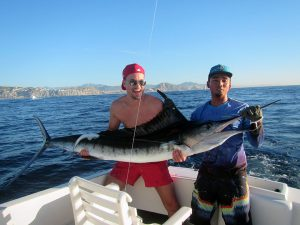 Striped Marlin fished in Cabo San Lucas on 11/06/18