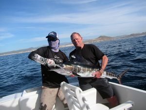 Striped Marlin fished in Cabo San Lucas on 1/03/19