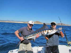Striped Marlin fished in Cabo San Lucas on 1/30/19