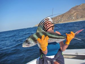 Roosterfish fished in Cabo San Lucas on 5/28/19