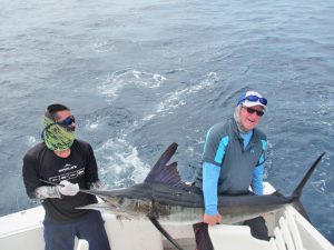 Striped Marlin fished in Cabo San Lucas on 6/11/19