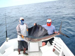 Pacific Sailfish fished in Cabo San Lucas on 8/15/19