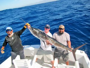 Striped Marlin fished in Cabo San Lucas on 8/25/19
