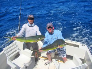 Dorado fished in Cabo San Lucas on 9/24/19