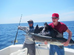 Pacific Sailfish fished in Cabo San Lucas on 9/02/19