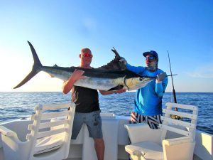 Striped Marlin fished in Cabo San Lucas on 11/2/19