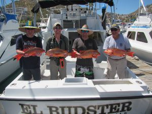 Eight Red Snappers fished in Cabo San Lucas on 3/16/20
