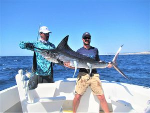 Catch & release 100 lb Striped Marlin in Cabo San Lucas on 10/20/20