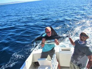 Catch & release 120 lb Striped Marlin in Cabo San Lucas on 12/2/20