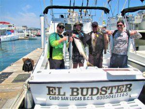 Caught Yellowtail, Skipjack and Sierra Mackerel in Cabo San Lucas on 4/4/21