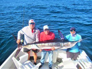 Catch & release 120 lb Striped Marlin in Cabo San Lucas on 4/28/2021