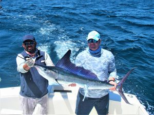 Catch & release 80 lb and 140 lb Striped Marlin in Cabo San Lucas on 5/1/2021