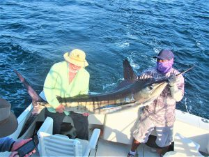 Catch & release 100 LB 120 LB 100 LB and 130 LB Striped Marlin in Cabo San Lucas on 6/19/2021