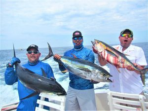 Caught several Yellowfin Tuna in Cabo San Lucas on 9/16/21